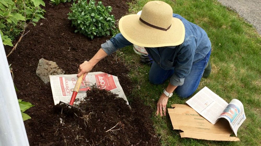 Showing Those Weeds Who's Boss – Quick Tip Friday