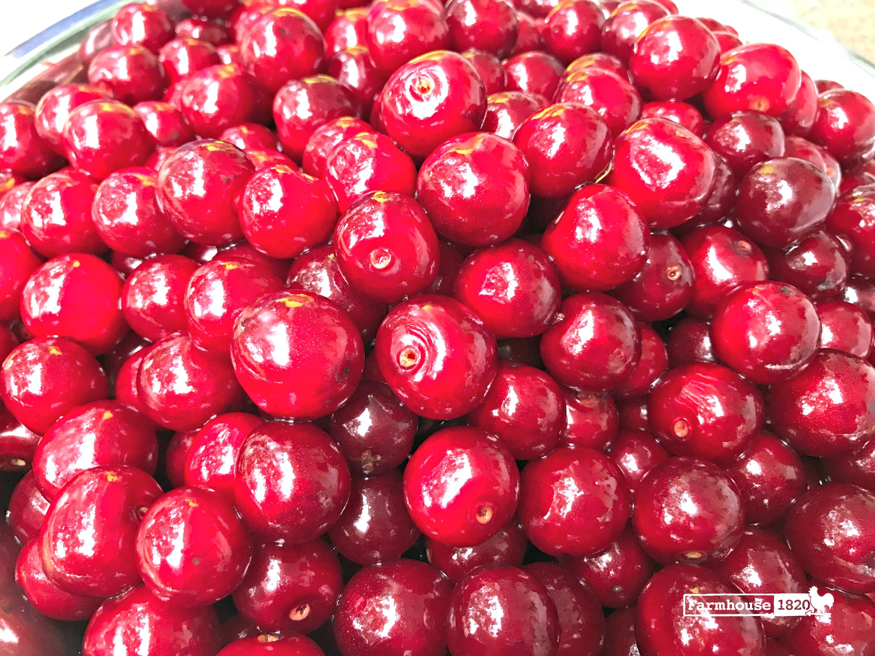 sour cherries - the crop