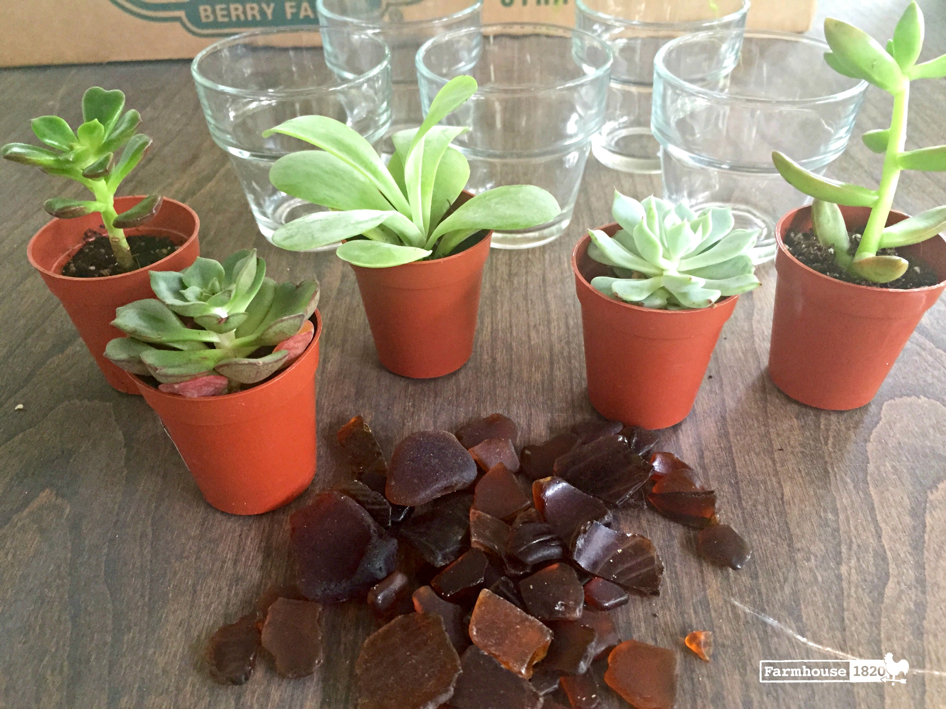 succulents - how to plant