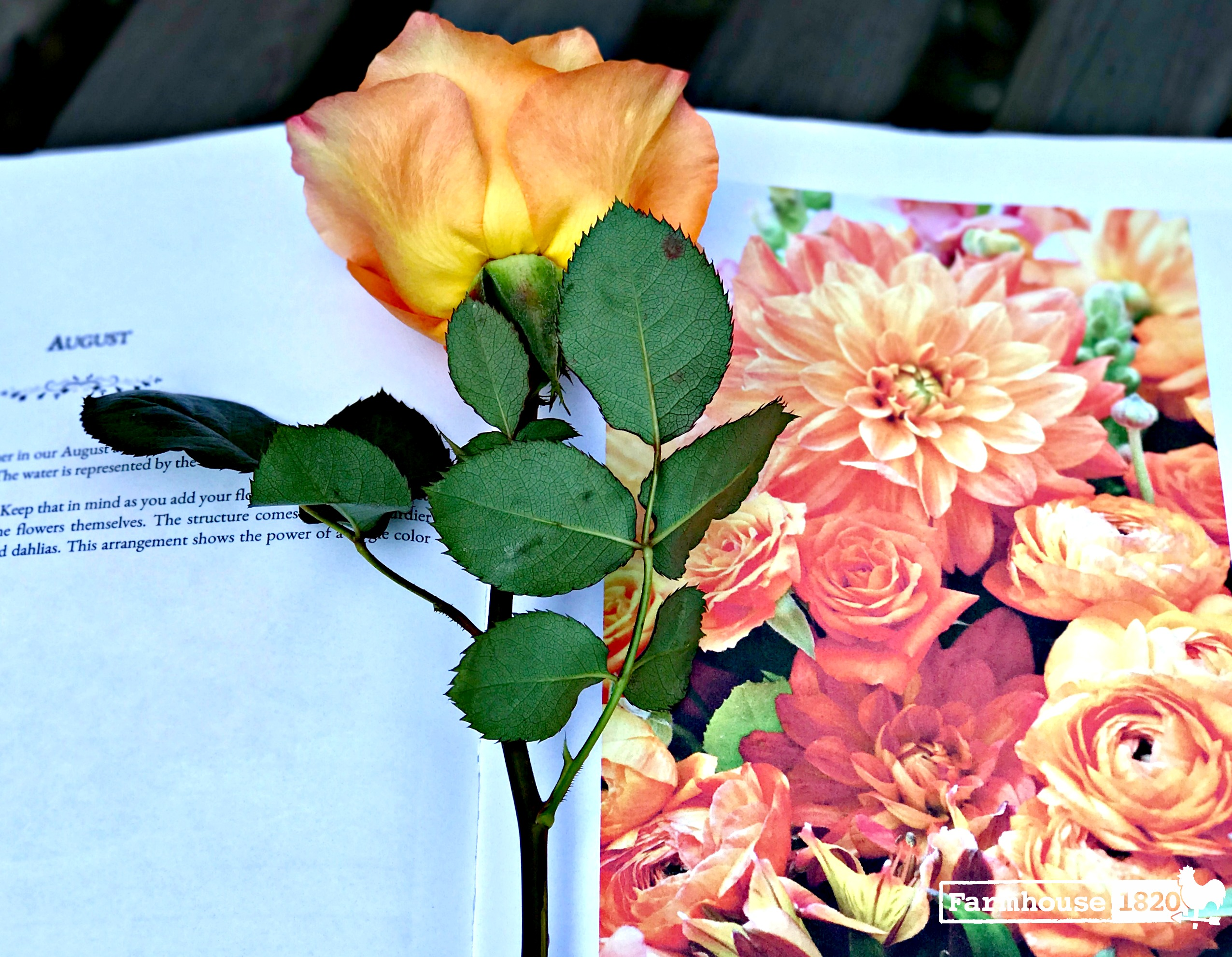 A Year In Flowers - A book review, August