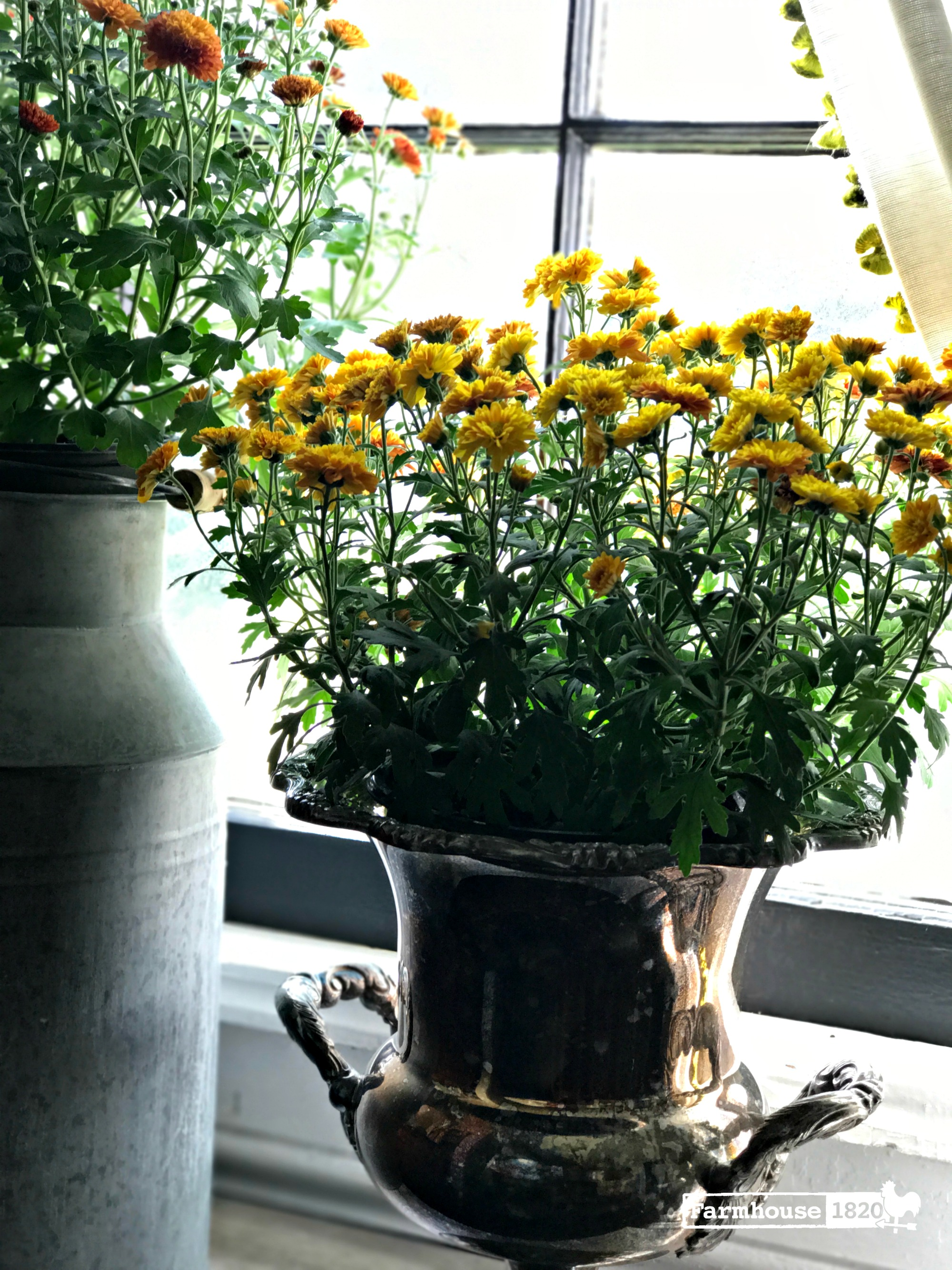 fall decorating - embrace the tarnish and place a mum in it