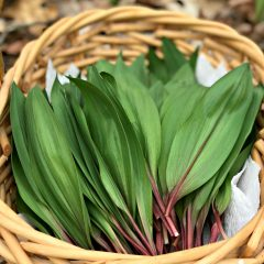 How To Forage For Ramps And Where They Grow