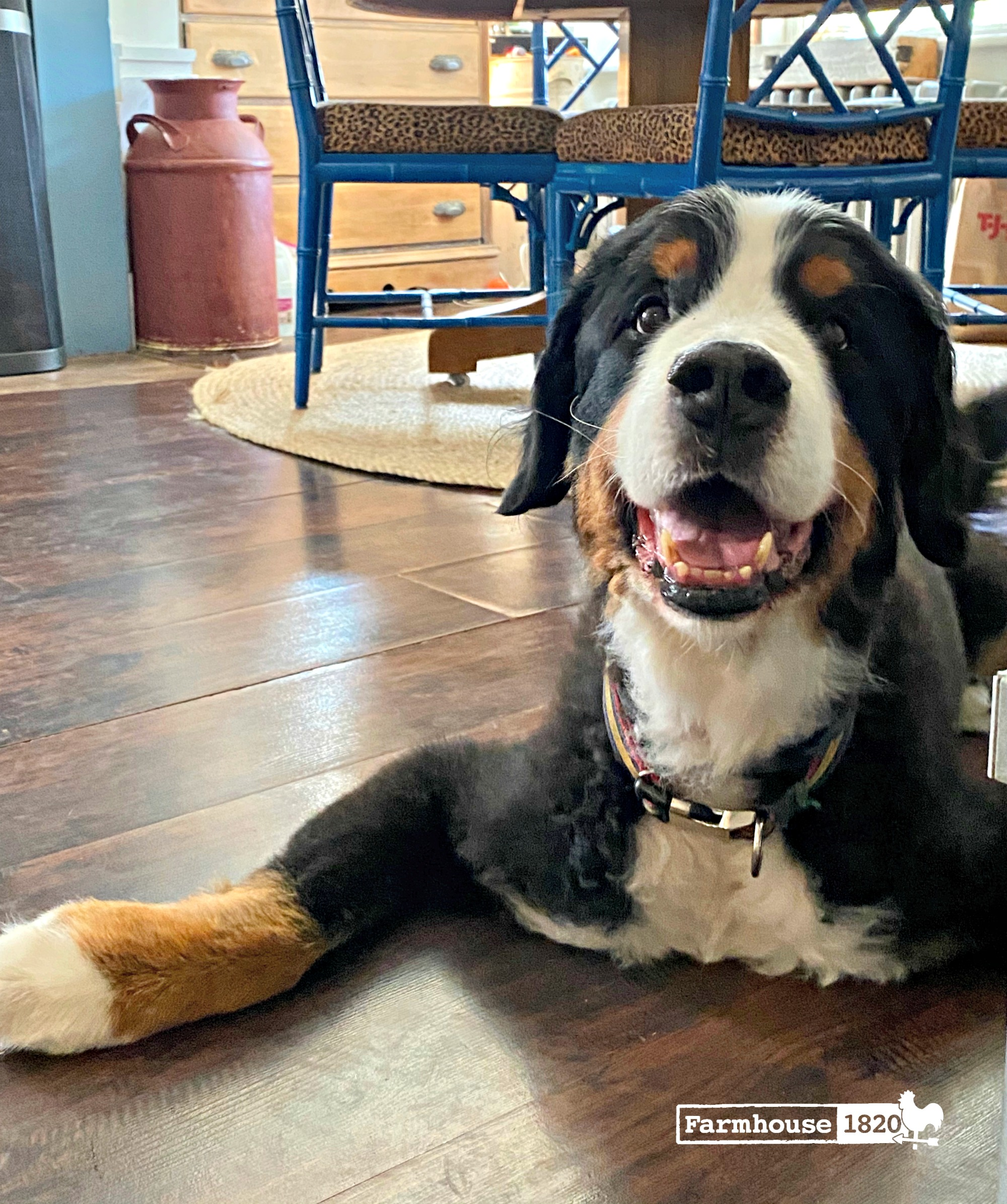 CBD - the benefits our dog Hudson has received from CBD