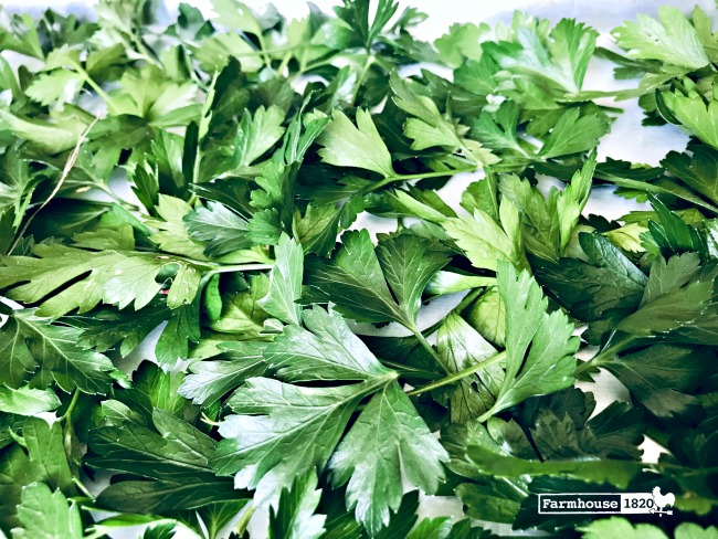 fresh herbs - how to freeze fresh parsley