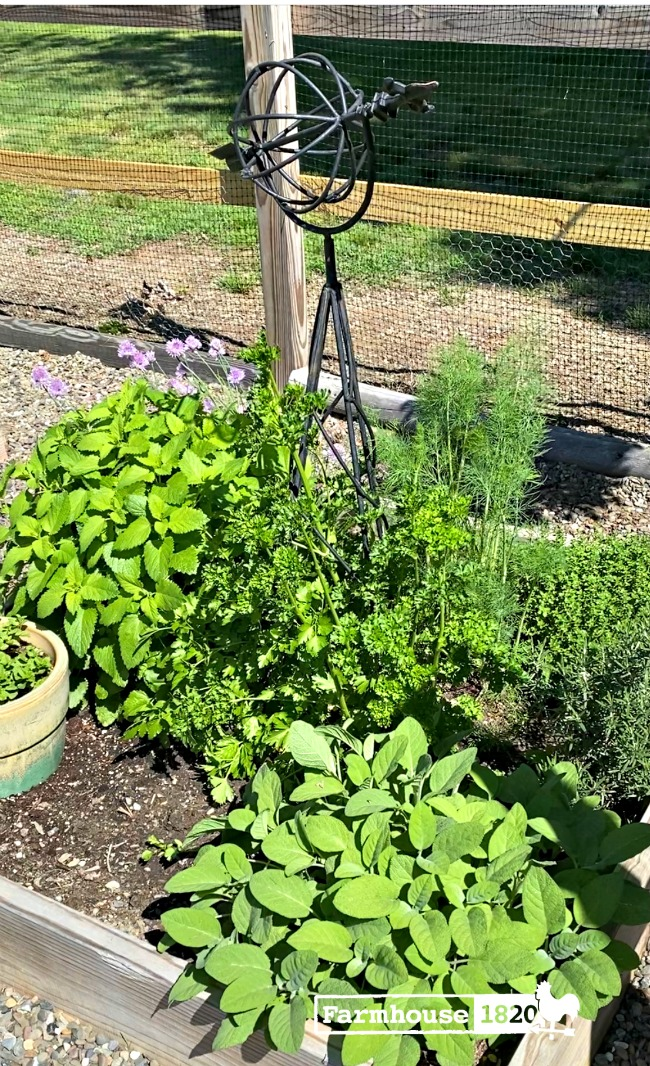 fresh herbs - tips for growing an herb garden