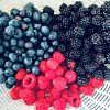 Quick Tip Friday – How To Care For Fresh Berries