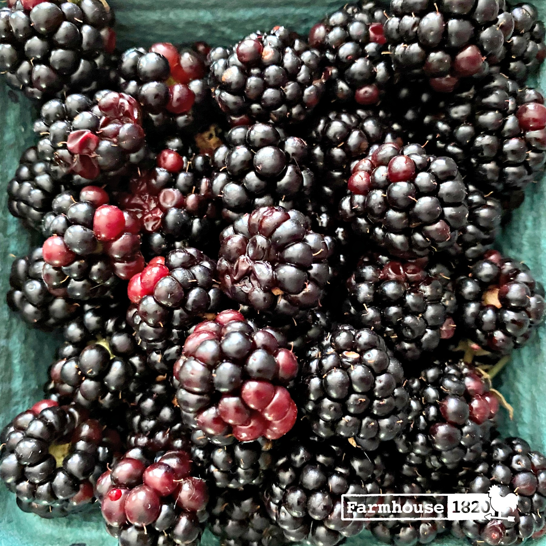 quick tip - preserving blackberries