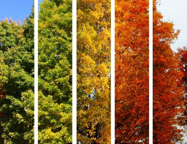 5 Fall Tasks To Prep Your Home For Winter
