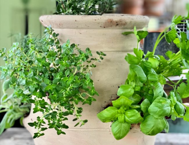 Let Me Show You How To Grow An Herb Garden Inside